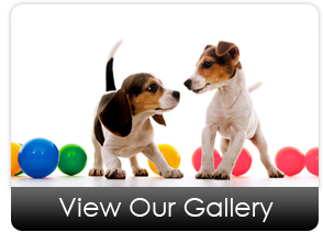 dog_daycare_gallery